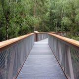 Ботанический след через деревья, новый интересный парк места Стоковая Фотография RF