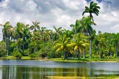 ботанический fairchild садовничает тропическо Стоковая Фотография RF