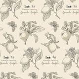 Ботаническое собрание, садовничая элементы дизайна, цветок, листья Стоковая Фотография