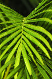 ботаническо Стоковое Изображение