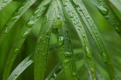 ботаническо Стоковое Фото
