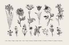 ботаническую Комплект карточка предпосылки цветет сеть сбора винограда шаблона страницы приветствию всеобщая иллюстрация штока