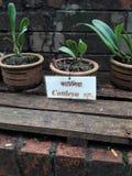ботаническую Стоковое фото RF