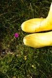 2 ботинка стоя на траве Стоковое Изображение RF