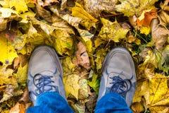 Ботинки в желтых листьях сверху Стоковые Фотографии RF