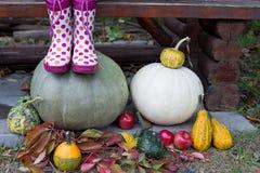 Ботинки и тыквы дождя Стоковые Изображения