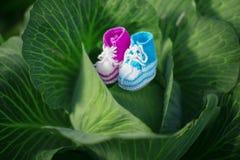 ботинки красного цвета младенца Newborn, искусство ребенк Ботинки ребенка красоты в капусте мальчик Стоковое Фото