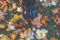 Ботинки на листьях Стоковые Изображения RF