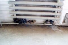 Ботинки работы высушенные на радиаторе Стоковая Фотография RF