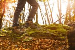 Ботинки Hikers на следе леса Пеший туризм осени Стоковые Изображения
