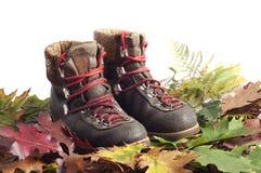 Ботинок горы на ковре листьев осени Стоковая Фотография RF