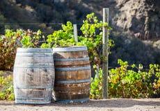 Бочонки и виноградные вина вина в винограднике Стоковые Изображения RF
