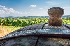 Бочонок вина на винограднике в Mikulov Стоковое Изображение RF