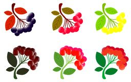 Боярышник Боярышник с листьями Иллюстрация акварели на белой предпосылке иллюстрация штока