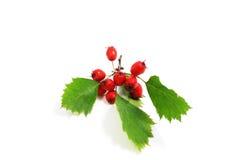 боярышник ягод Стоковые Фото