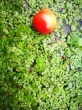 Более ненастные вишни лежа на земле с различной предпосылкой Стоковое Фото