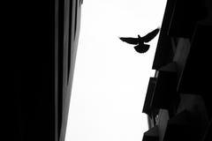 Более низкий угол для летящей птицы Стоковое фото RF