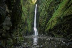 Более низкое Oneonta понижается водопадом расположенным в западном ущелье, Орегоне Стоковое фото RF