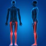 Боли косточки соединения человеческого тела Стоковое фото RF
