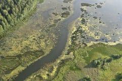 Болота, болота, трясины Стоковые Фото