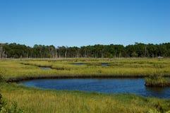 Болота и заболоченные места берега Джерси Стоковые Фотографии RF