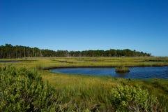 Болота и заболоченные места берега Джерси Стоковые Изображения RF