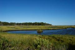 Болота и заболоченные места берега Джерси Стоковая Фотография RF
