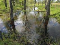 Болотистое время территории весной Стоковые Фотографии RF
