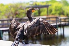 2 болотистой низменности птицы Стоковое Изображение RF
