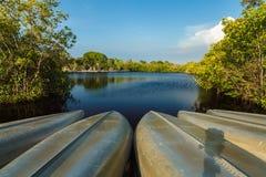 Болотистые низменности Флориды Стоковое фото RF