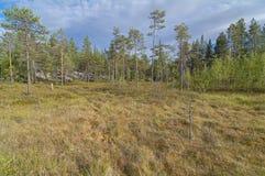 Болотистый край леса стоковое фото