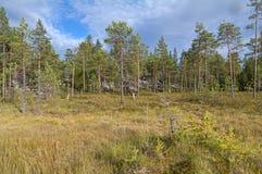 Болотистый край леса стоковая фотография rf