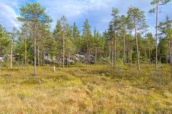 Болотистый край леса стоковые фотографии rf