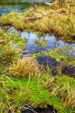 Болотистый поток в Алтай Taiga Стоковые Изображения RF