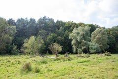 болотоы Стоковое Фото