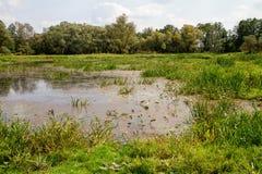 болотоы Стоковое Изображение