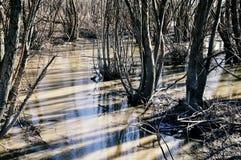 Болото болота болота Стоковое Изображение