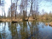 Болото, болотистое река Стоковые Изображения