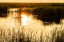 Болото при трава отражая в воде на Стоковые Фото