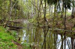 Болото, трясина, болото, болото, заболоченное место, фен, болото, трясина, slough, топь Стоковое фото RF