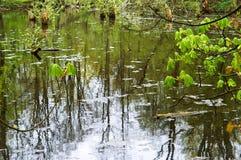 Болото, трясина, болото, болото, заболоченное место, фен, болото, трясина, slough, топь Стоковая Фотография