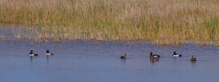 болото Стоковое Фото