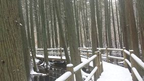 Болото Snowy Стоковое Изображение RF