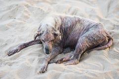 Больная бездомная собака Стоковое Изображение RF