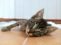 больной кота Стоковые Изображения RF