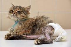 Больной кот в пеленках стоковое фото