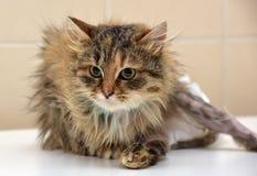 Больной кот в пеленках стоковые фотографии rf
