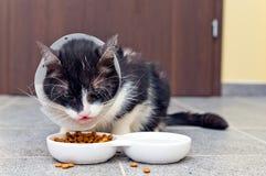 Больной кот ест корм для домашних животных Стоковая Фотография