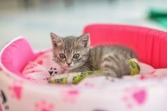 Больной тутор ноги кота Стоковые Изображения RF