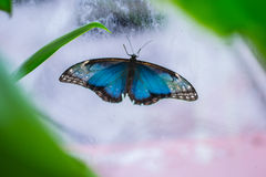 большая бабочка Стоковое фото RF